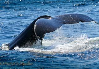 Whale001jpg